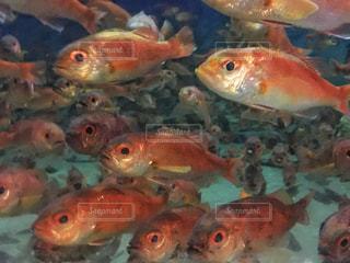 水の中の魚の群れの写真・画像素材[1137718]