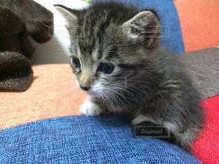 猫の写真・画像素材[36888]