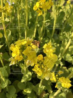 蜂の写真・画像素材[1137991]