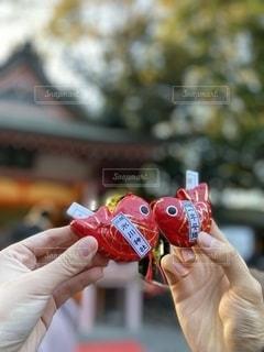 金魚のおみくじの写真・画像素材[2747810]