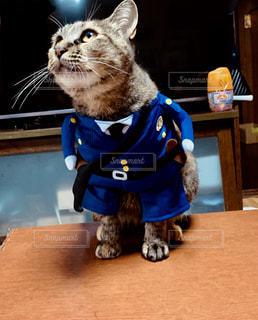 猫警官チーの写真・画像素材[2570099]