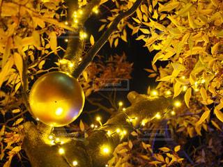 金色に光る玉の写真・画像素材[1145817]