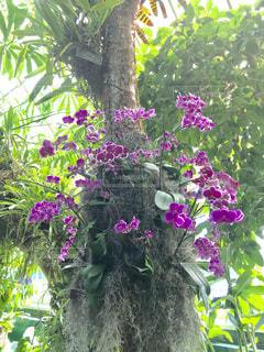 ニューヨークボタニカルガーデン内の花の写真・画像素材[1151537]