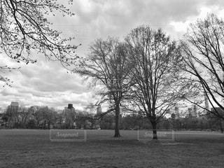 セントラルパーク内のフィールド。モノクロ版の写真・画像素材[1155225]
