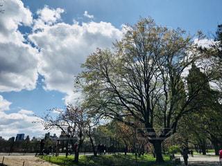 都会の中のオアシス、セントラルパークの写真・画像素材[1155268]