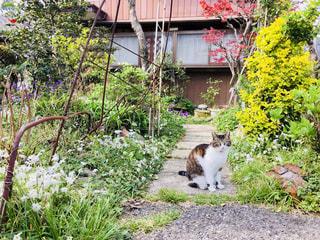 猫の写真・画像素材[1157080]