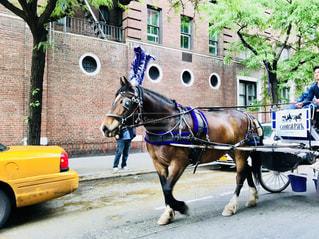 マンハッタンの観光馬車の写真・画像素材[1232517]