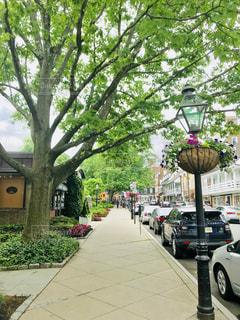 プリンストンの歩道と街路樹の写真・画像素材[1241138]