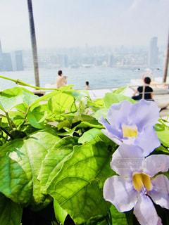 プールサイドの花の写真・画像素材[1243050]
