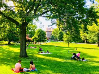 木陰でピクニックする人々の写真・画像素材[1272238]