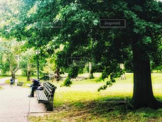 セントラルパークで読書の秋 1の写真・画像素材[1497547]