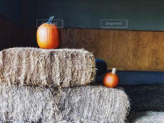 鏡餅みたいなほし草と南瓜の写真・画像素材[1515501]