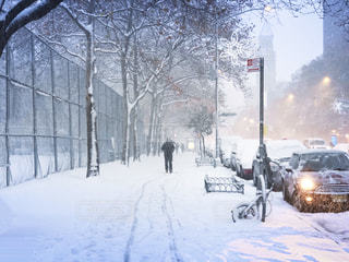 初雪の中の写真・画像素材[1621384]