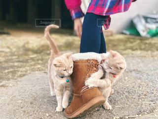 少女の足元で戯れる子猫たちの写真・画像素材[1629058]