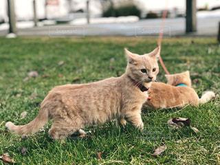 草の上の子猫たちの写真・画像素材[1629060]