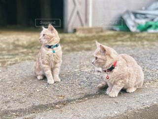 同じ方向を見る子猫たちの写真・画像素材[1629061]