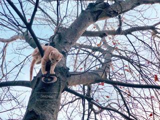 木から降りたい子猫の写真・画像素材[1629062]