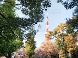 秋の東京タワー 2の写真・画像素材[2717299]