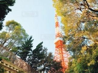 秋の東京タワーの写真・画像素材[2717300]