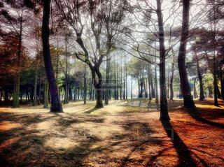 自然の写真・画像素材[36880]