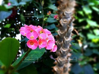 自然の写真・画像素材[36955]