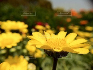 自然の写真・画像素材[36966]