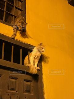 外国の野良猫ちゃんの写真・画像素材[1149902]