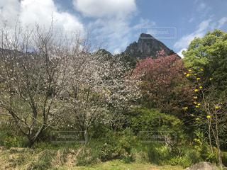 背景の山と木の写真・画像素材[1156994]