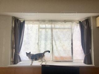 窓の前の猫の写真・画像素材[1684446]