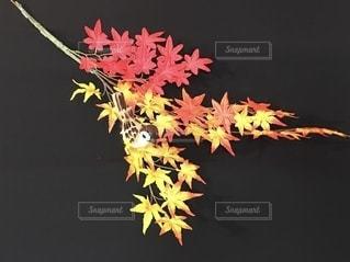 ハンドメイド雀と紅葉の写真・画像素材[2667417]