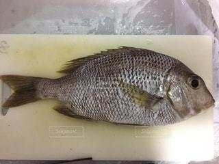 まな板の上の魚の写真・画像素材[1234968]