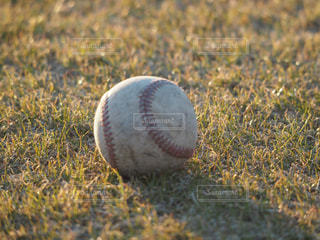 野球部に転がるボールの写真・画像素材[1140108]