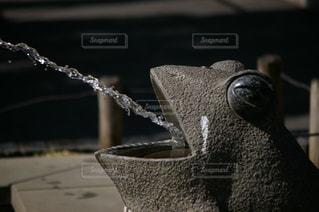 噴水カエル🐸の写真・画像素材[1142158]
