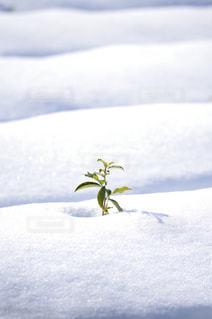 雪の写真・画像素材[983239]