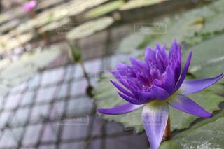 花の写真・画像素材[1141002]