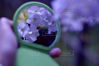 鏡越しの桜のアップの写真・画像素材[1141335]