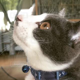 猫の横顔の写真・画像素材[1141527]