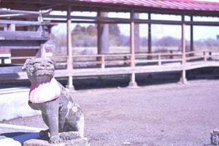 神社の狛犬の写真・画像素材[1142597]