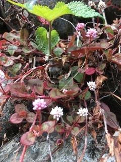 赤緑の葉っぱと花?の写真・画像素材[4367829]