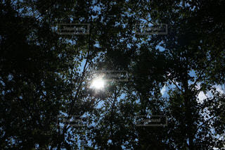 木々の間から差し込む光の写真・画像素材[2329799]
