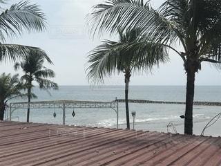 水の体の近くのビーチでヤシの木のグループの写真・画像素材[1141717]