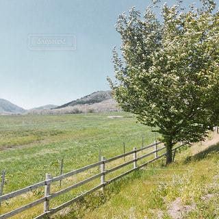 蒜山高原の写真・画像素材[1202236]