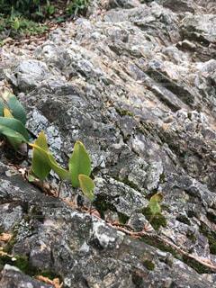 近くの岩のアップの写真・画像素材[1205292]