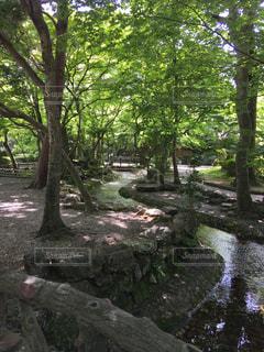 フォレスト内のツリーの写真・画像素材[1205298]