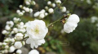 近くの花のアップの写真・画像素材[1143776]