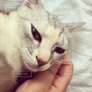 近くに猫のアップの写真・画像素材[1151551]