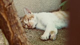 近くの地面に横になっている猫の写真・画像素材[1326045]