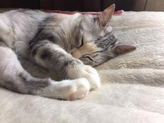 ベッドの上で横になっている猫の写真・画像素材[1326095]