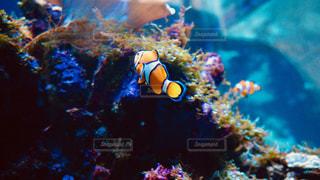 水族館の魚たち。の写真・画像素材[1326433]