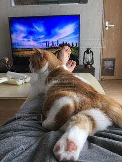 テレビの前に横になっている猫の写真・画像素材[1143141]